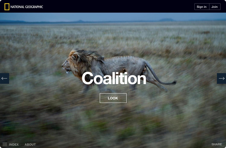 ng-serengeti-lion-coalition-noshadow