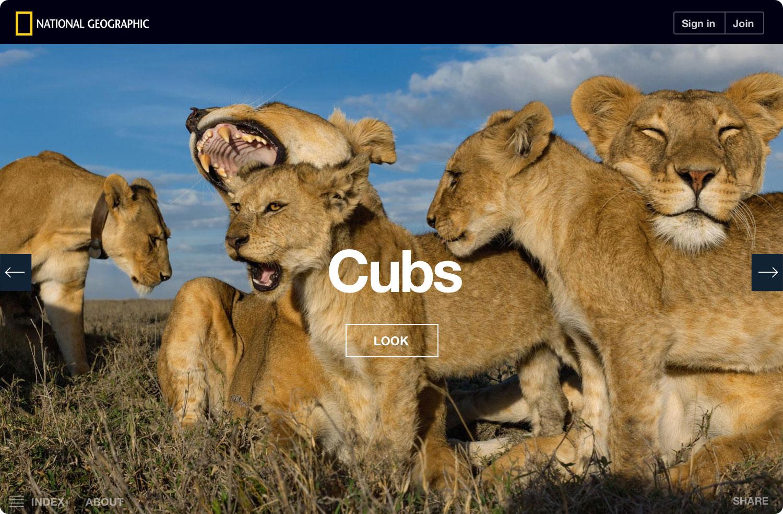 ng-serengeti-lion-cubs-noshadow