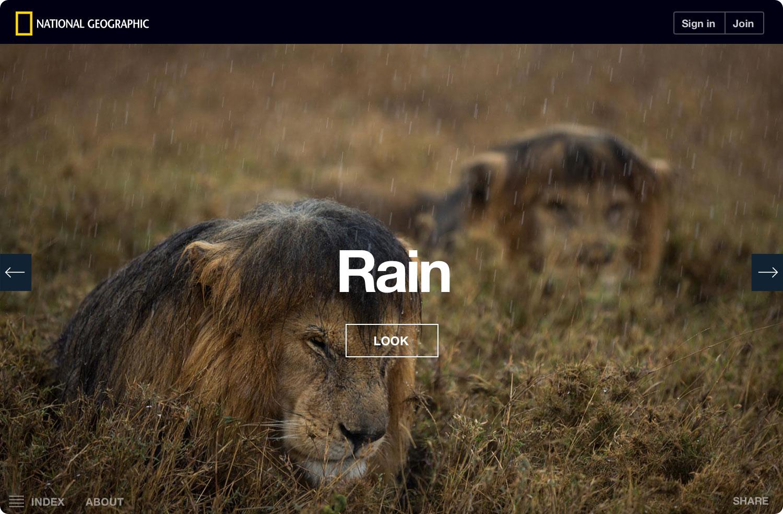 ng-serengeti-lion-rain-noshadow