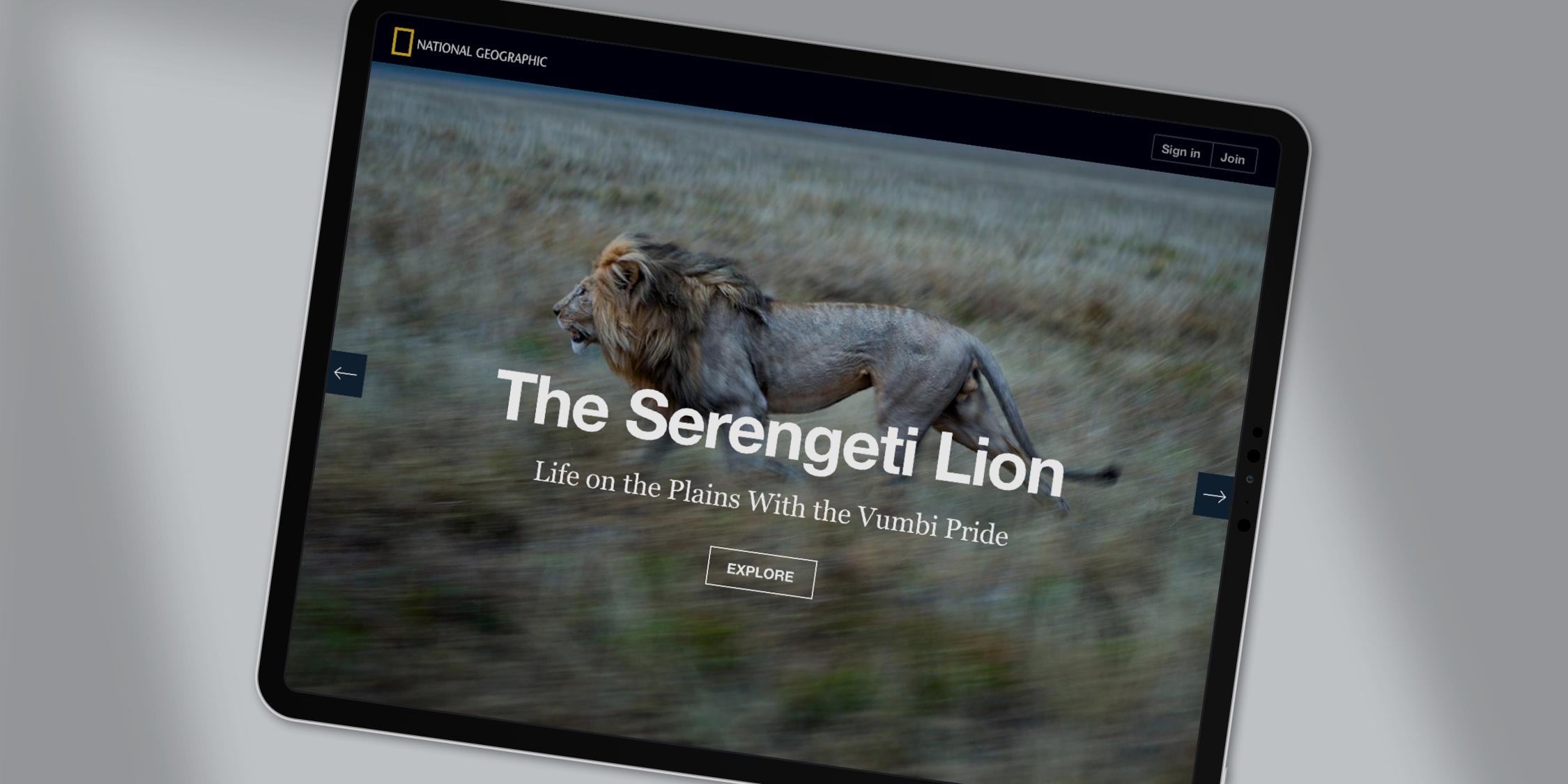 next-prev-serengeti-lion-2-2